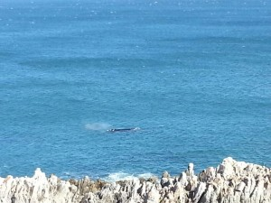 whale image 4